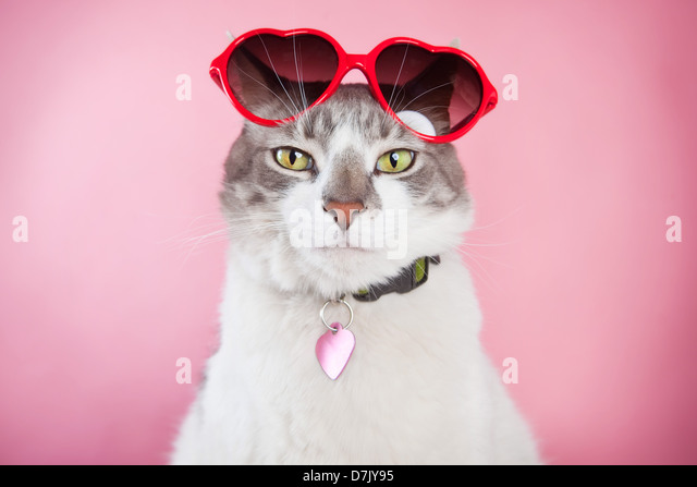 Cat looking confidently to camera with red valentine sunglasses perched on top of head against pink background. - Stock Image