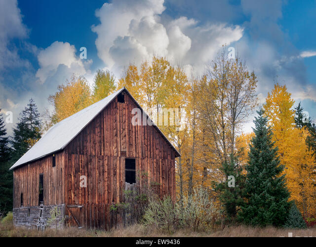 Barn with fall color. Near Trout Lake, Washington - Stock Image
