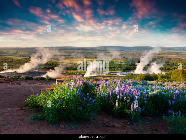 Erupting of the Great Geysir lies in Haukadalur valley on the slopes of Laugarfjall hill. Foggu summer morning in - Stock Image