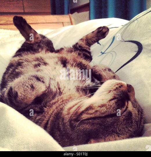 Tabby cat sleeping on his back - Stock-Bilder