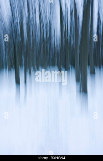 Blurred English woodland landscape of straight trees and winter snows. - Stock Image