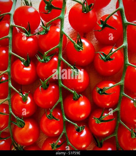 Lovely ripe cherry tomatoes on the vine. - Stock-Bilder