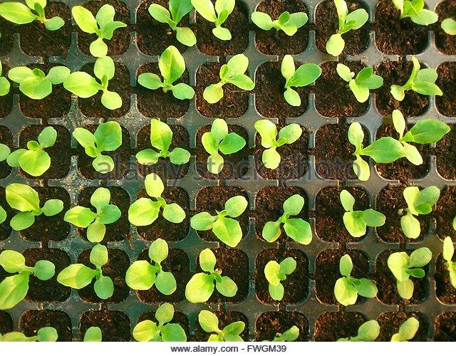 Full Frame Shot Of Seedling Tray - Stock-Bilder