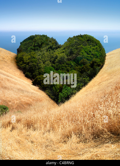 Landscape of trees in field that form the shape of a heart - Stock-Bilder