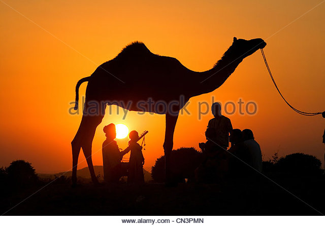 Silhouetted dromedary camel and traders, Pushkar Camel Fair, Rajasthan, India - Stock-Bilder