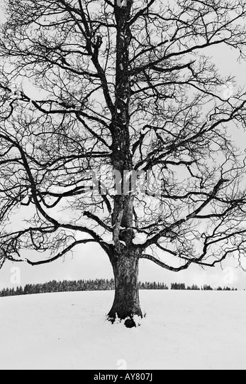 Snow Covered Trees In Winter Landscape - Stock-Bilder