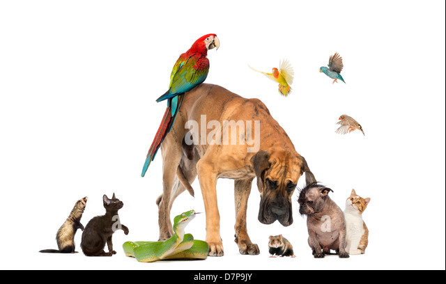 Group of animals including dogs, cats, birds, snake and a mouse against white background - Stock Image