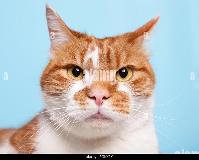 cat toy laser pointer