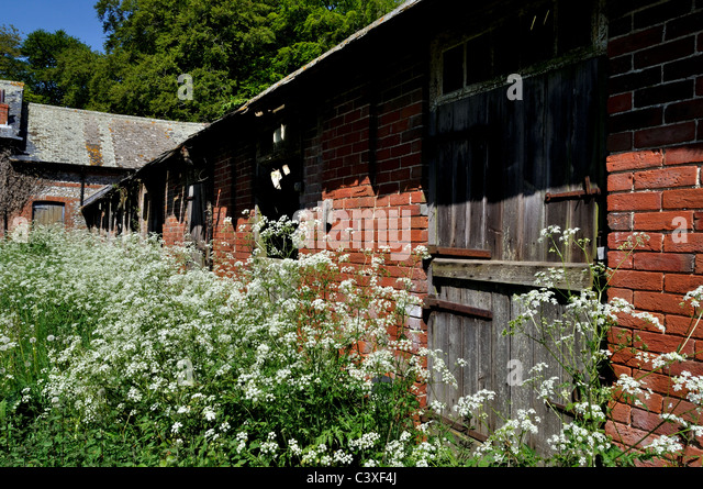 Derelict stables - Stock Image