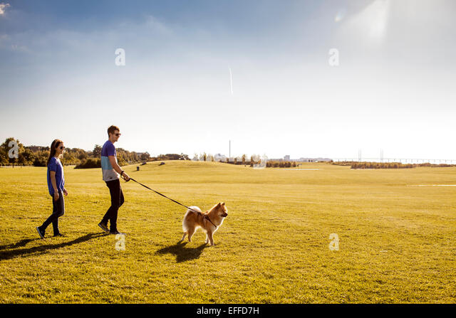 Full length of couple with dog walking at park on sunny day - Stock Image
