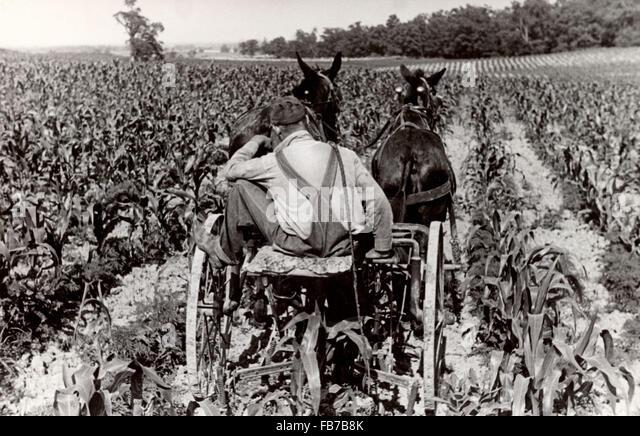 Farming, America 1930's - Stock Image