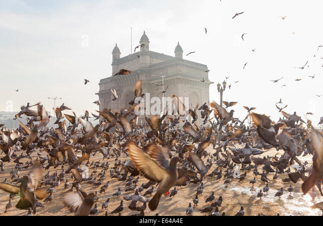 Pigeons, India Gate, Colaba, Mumbai (Bombay), India - Stock Image