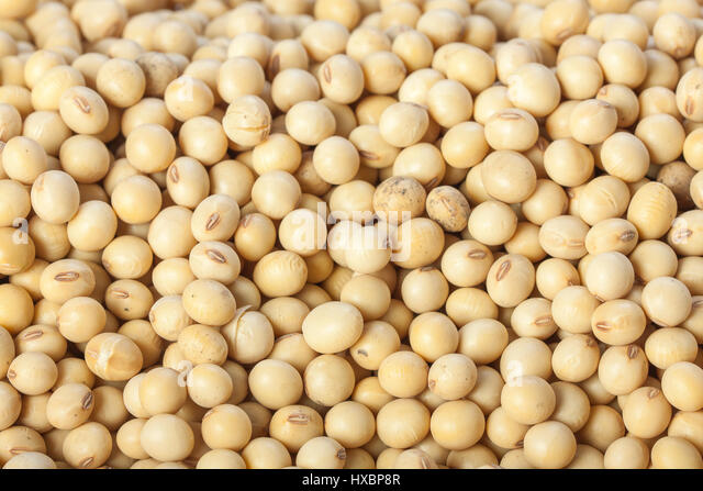Closeup of soy beans background. - Stock Image