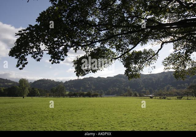 UK, England, Grasmere, pasture, scenery, - Stock Image