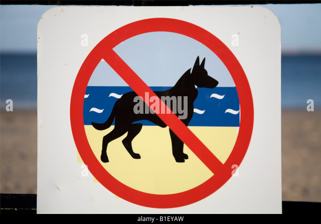 Are Dogs Allowed On Withernsea Beach