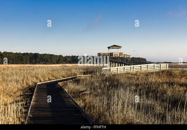 Salt marsh viewing platform at Bodie Island Lighthouse, Cape Hatteras National Seashore, North Carolina, USA - Stock Image