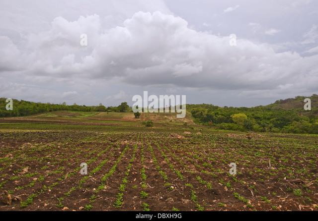 Rainforest land cleared for crops in Belize - Stock-Bilder