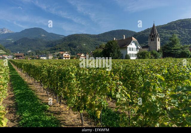 Clos del a Cure, Vineyards ,Aigle,  Lavaux region, Lake Geneva, Swiss Alps,  Switzerland - Stock Image