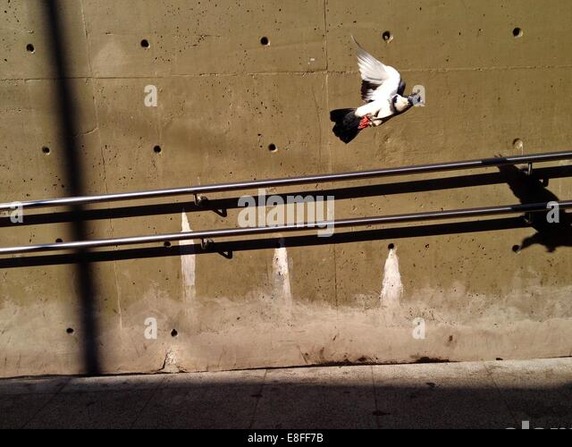 Brazil, Sao Paulo, Bird taking off - Stock Image