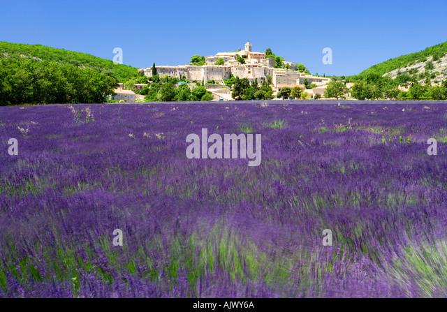 Hilltop village of banon viewed over Lavander Provence France - Stock Image