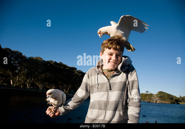 Ten Year old boy feeding Corellas Centennial Parkland Sydney New South Wales Australia - Stock Image