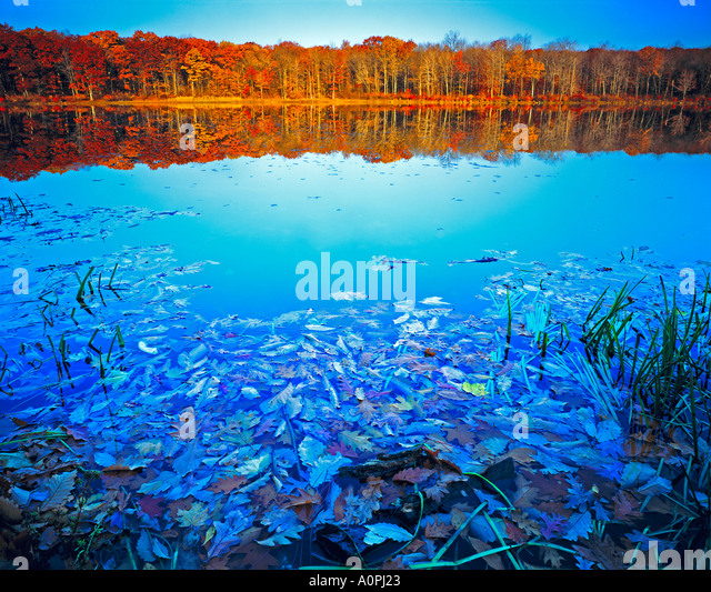 Autumn Color Reflections Stokes State Forest Appalachian Mountains New Jersey - Stock-Bilder