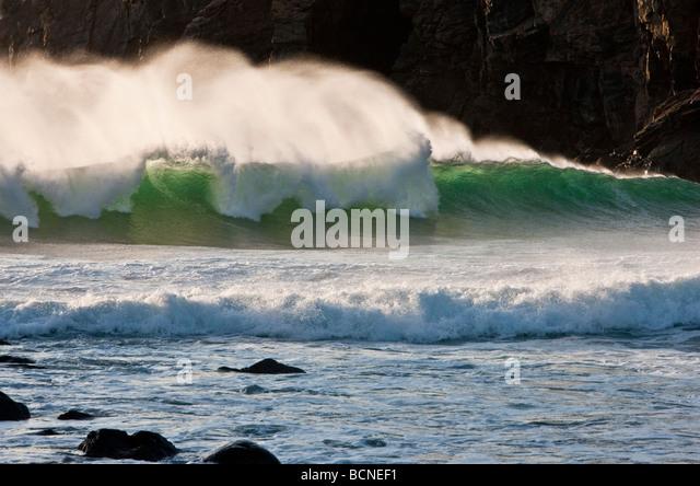 Butt Loch Surfer Pfeffer