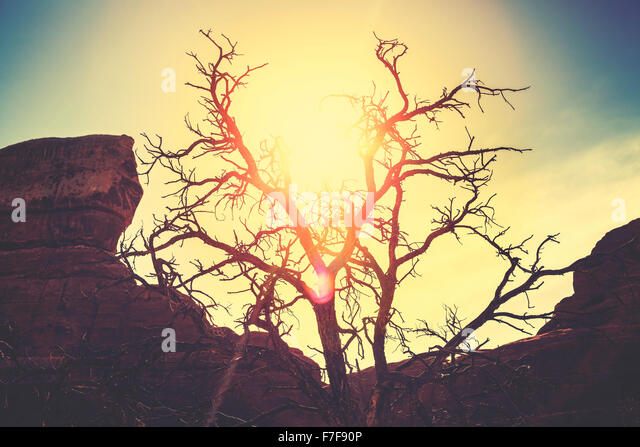 Vintage toned silhouette of a lonely dry tree at sunset, passing of time concept picture. - Stock-Bilder