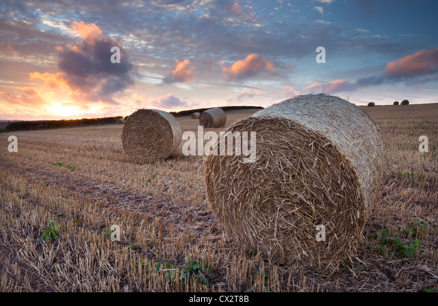 Bales in a harvested corn field at sunset, Devon, England. Summer (September) 2012. - Stock Image