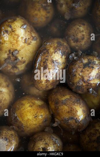 wet new potatoes with muddy peel. raw, potato, food, vegetable. - Stock Image