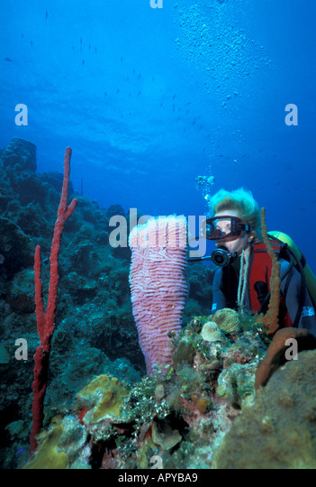 Jamaica Negril Woman Diver and Colorful Sponges - Stock Image