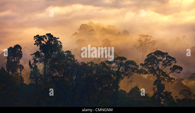 Rainforest at dawn, Danum Valley, Sabah, Borneo, Malaysia. - Stock Image