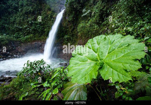 La Paz Waterfall -  north of Alajuela, Costa Rica - Stock Image