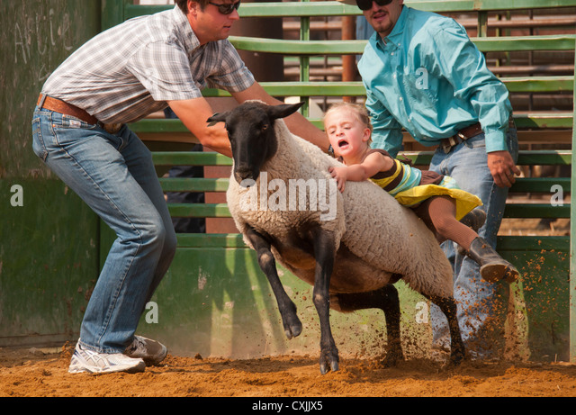 Young cowgirl riding sheep in Mutton Busting event rodeo, Bruneau, Idaho, USA - Stock Image