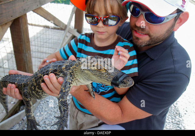 Fort Lauderdale Ft. Florida Weston Sawgrass Recreation Park Everglades baby juvenile alligator holding boy man father - Stock Image