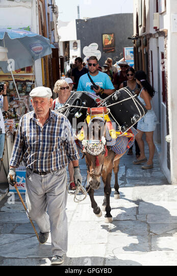 A luggage porter uses a donkey to navigate the narrow and steep paths in Oia on the Greek island of Santorini - Stock Image
