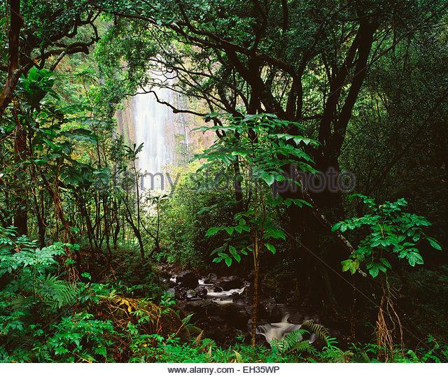 400 Foot Waimoku Falls,  Haleakala National Park, Maui, Hawaii. - Stock Image