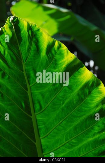 leaf - Stock-Bilder