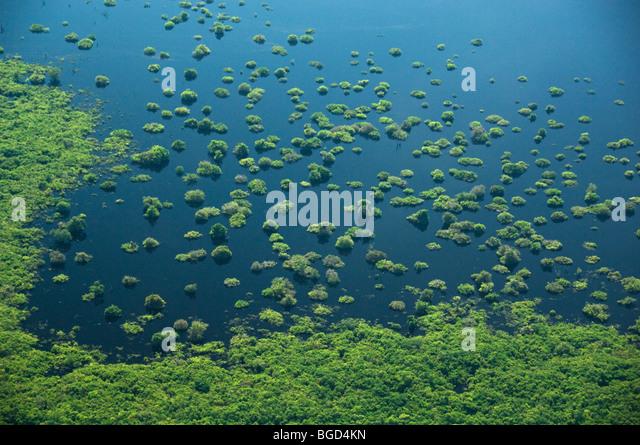 Flooded Forest, Anavilhanas Archipelago, Rio Negro. Amazonia, Brazil AERIAL - Stock Image