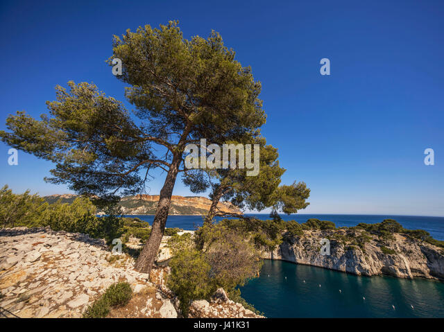 Port Miou, Calanques, Cliff, Cassis,  Provence, France - Stock Image