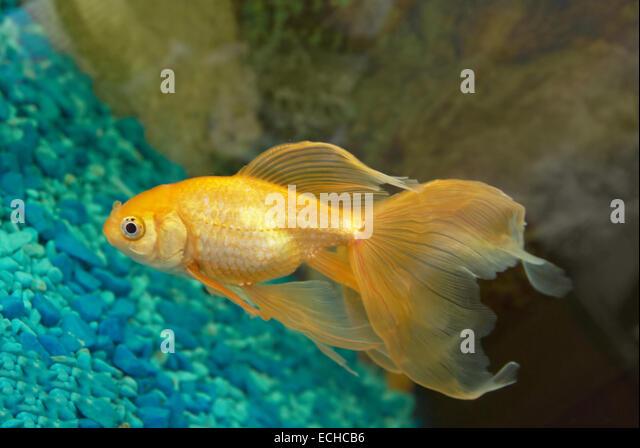 Eye and goldfish bowl stock photos eye and goldfish bowl for 405 tropical fish