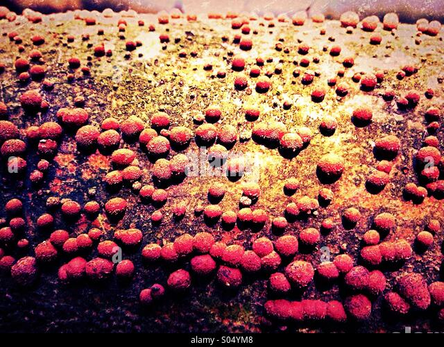 Fungus growing on tree trunk - Stock Image