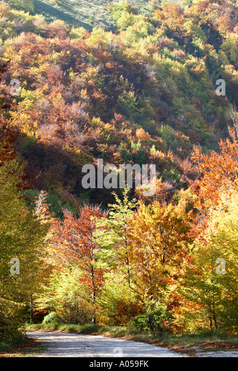 Beautiful Autumn fall colors to be found on the slopes of the Sibillini Mountains in Le Marche ,Italy - Stock Image