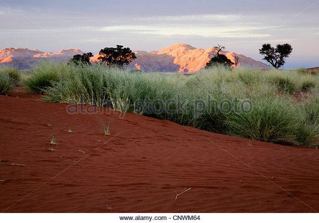 sunset in the desert, Namibia, Namib Naukluft National Park - Stock Image
