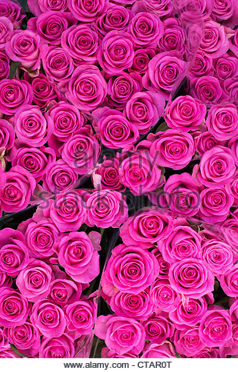 Bunches of pink roses at a flower market - Stock Image