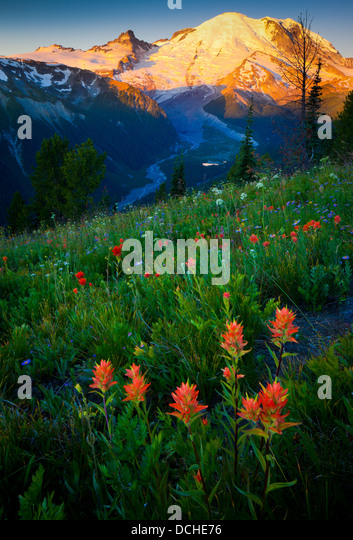 Sunrise at Mount Rainier's Sunrise area with the White River below - Stock Image
