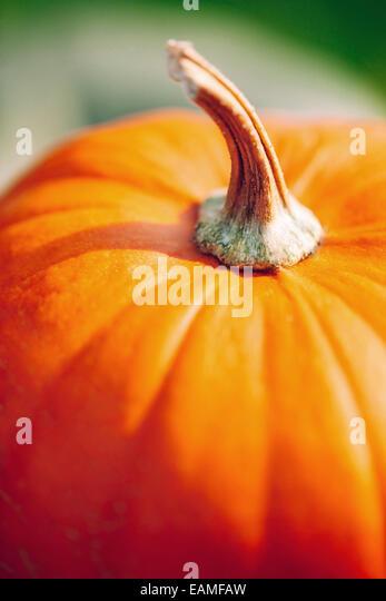 Pumpkin closeup - Stock-Bilder