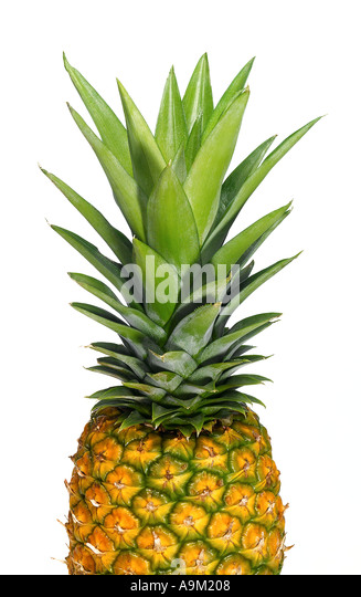 pineapple crown shot for cut out - Stock Image