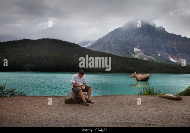 Man and moose in Banff National Park, Alberta, Canada - Stock Image
