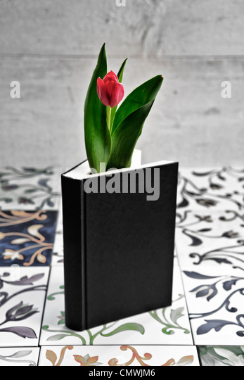 a tulip in a book - Stock Image